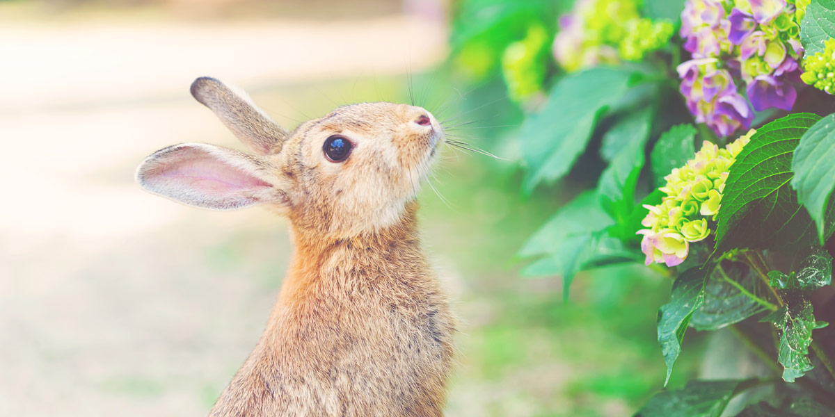 Protect Your Garden Against Rabbits